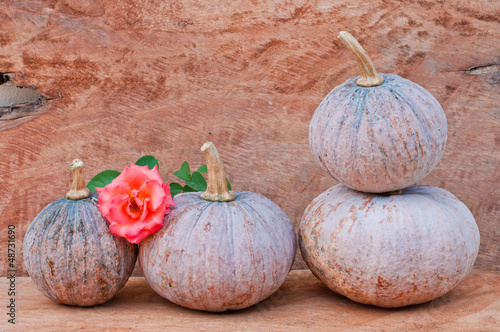 still life with mini pumpkins on old wood