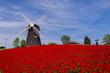 Alte Windmühle im Norden