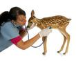 wildlife vet