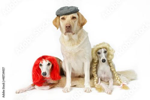 Drei verkleidete Hunde