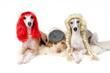 Drei Hunde mit Perücke