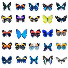 Collection de papillons sur fond blanc en haute définition