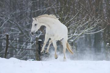 Pferde - Schnee