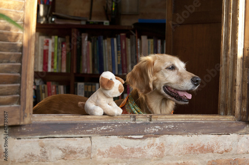 dog and toy in the window