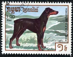 stamp printed by Cambodia, shows cute dog doberman