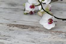 Orchidée sur le vieux bois