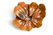 Pinienkerne im Pinienzapfen