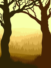 Vertical illustration within forest.