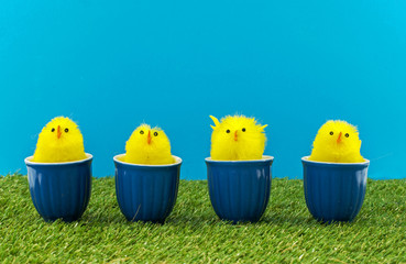 easter ducks in blue cups