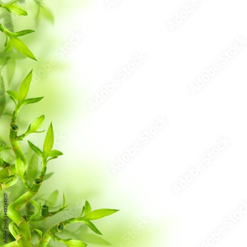 bambusowi-i-zieleni-liscie-tlo