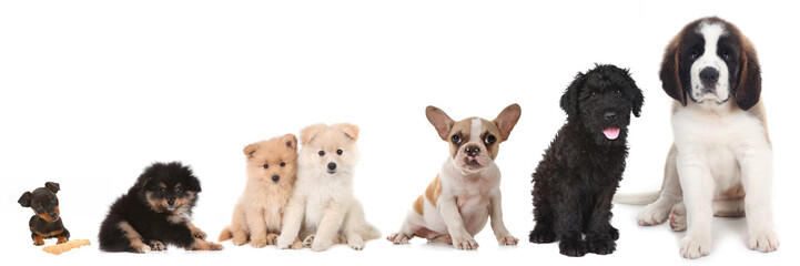 Different Breeds of Puppy Dogs on White