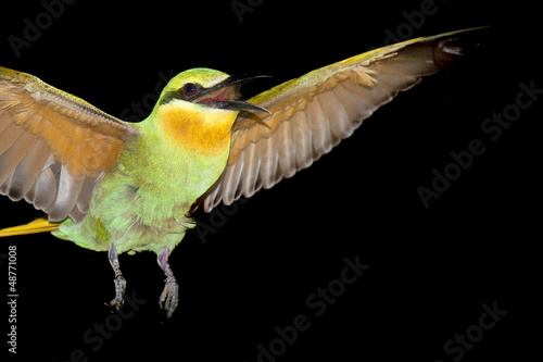 A bee eater in the black background