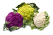 tris of Fresh cauliflower on white background