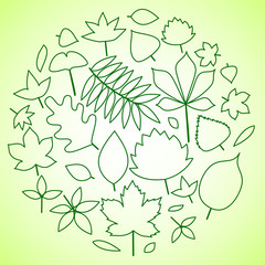 Green leaves circle composition background, vector