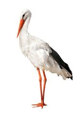 single stork isolated on white