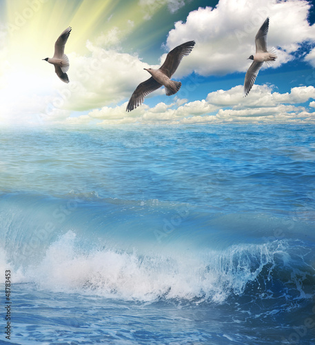 Fototapeten,himmel,meer,vögel,seemöwe