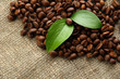 Coffee beans with leaves on sack-cloth background