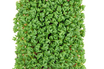 Fresh cress salad