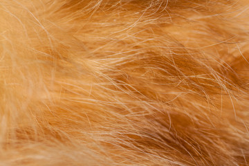 Red cat fur closeup. Shallow depth of field.