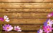 fiori sul legno