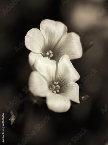 Wild flower © Zacarias da Mata