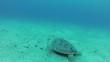 Turtle   Endangered Species