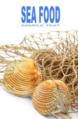 The sea shell on a fishing net.