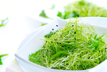 Microgreens. Healthy Green Salad. Little Sprouts. Diet