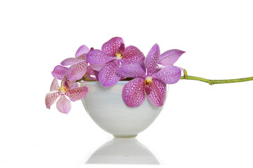 Orchid in a white bowl pink