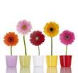 Blumen in bunten Blumentöpfen
