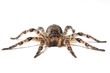 wolf spider over white - 48819080