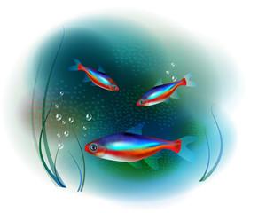 neon fish in the sea