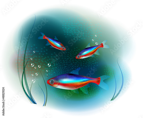 neon fish in the sea