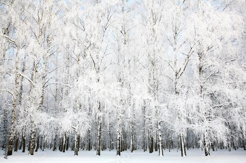 Russian winter - 48825670