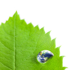 Earth into Big Water Drop on a Green Leaf  / white background