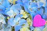 Love - closeup of light blue hydrangea with pink heart