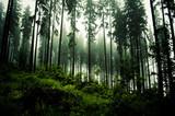 Der Fichtenwald