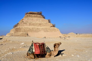 Camel with the step pyramid of Djoser in Saqqara