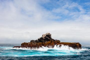 Rock with sea birds