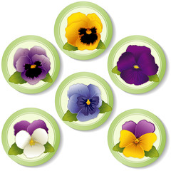 Spring Flower Buttons, Pansies and Johnny Jump Ups (Violas)