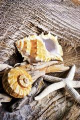 Muscheln und Seestern