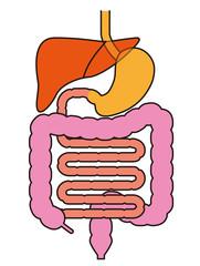 内臓消化器