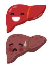 Zdrowa wątroba wątroby i niezdrowe