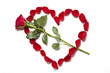 Red rose petals in heart shape with rose