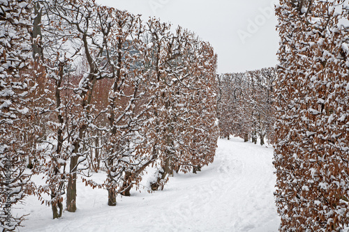 Vienna - live fence from gardens of Schonbrun palace in winter