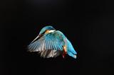 Fototapete Jade - Schwarzer hintergrund - Vögel