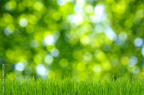 grass and green background
