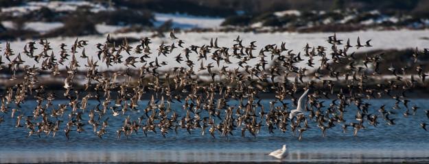 Inland Sea Birds