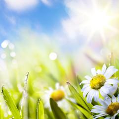 art abstract background springr flower in grass on sun sky
