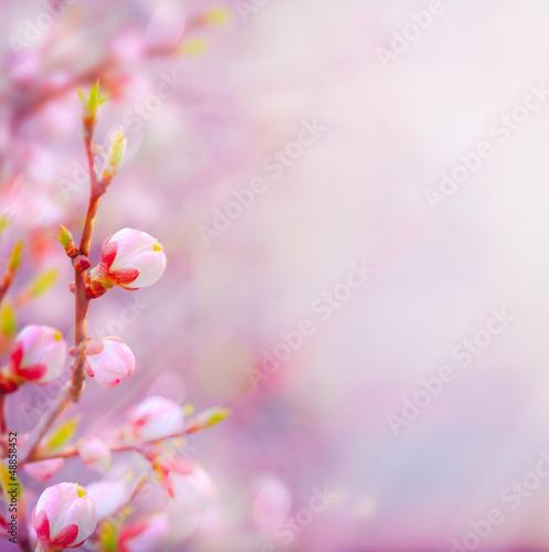 Fotobehang Kersen art Beautiful spring blossoming tree on sky background